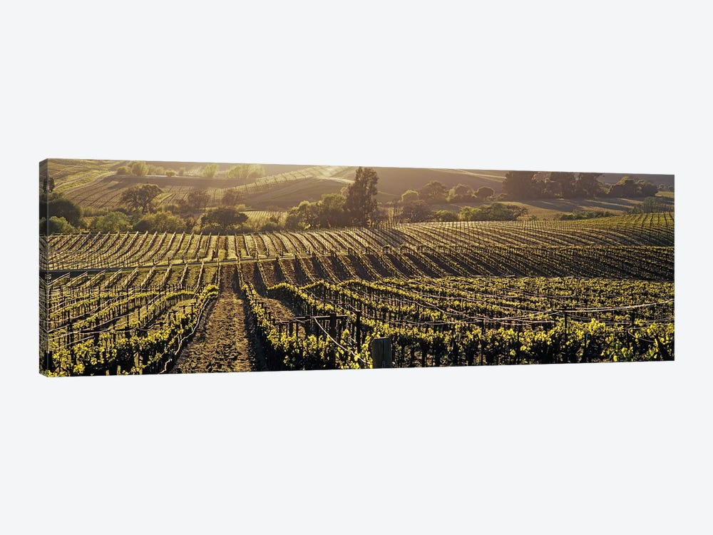 Aerial View Of A Vineyard, Los Carneros AVA, California, USA by Panoramic Images 1-piece Canvas Artwork