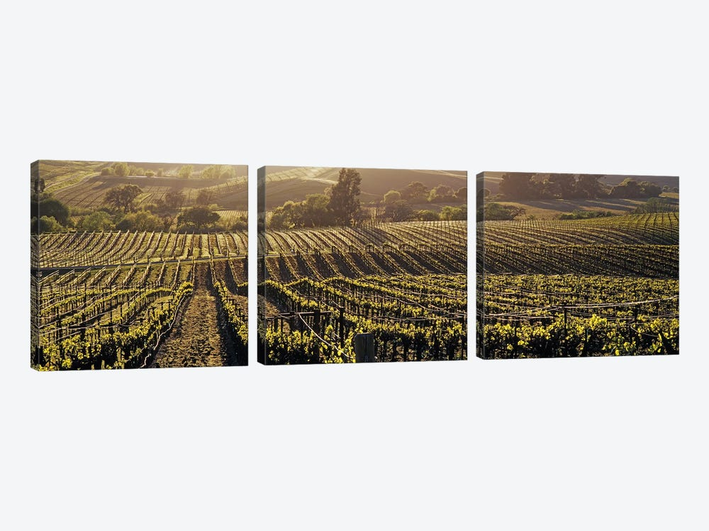 Aerial View Of A Vineyard, Los Carneros AVA, California, USA by Panoramic Images 3-piece Canvas Wall Art
