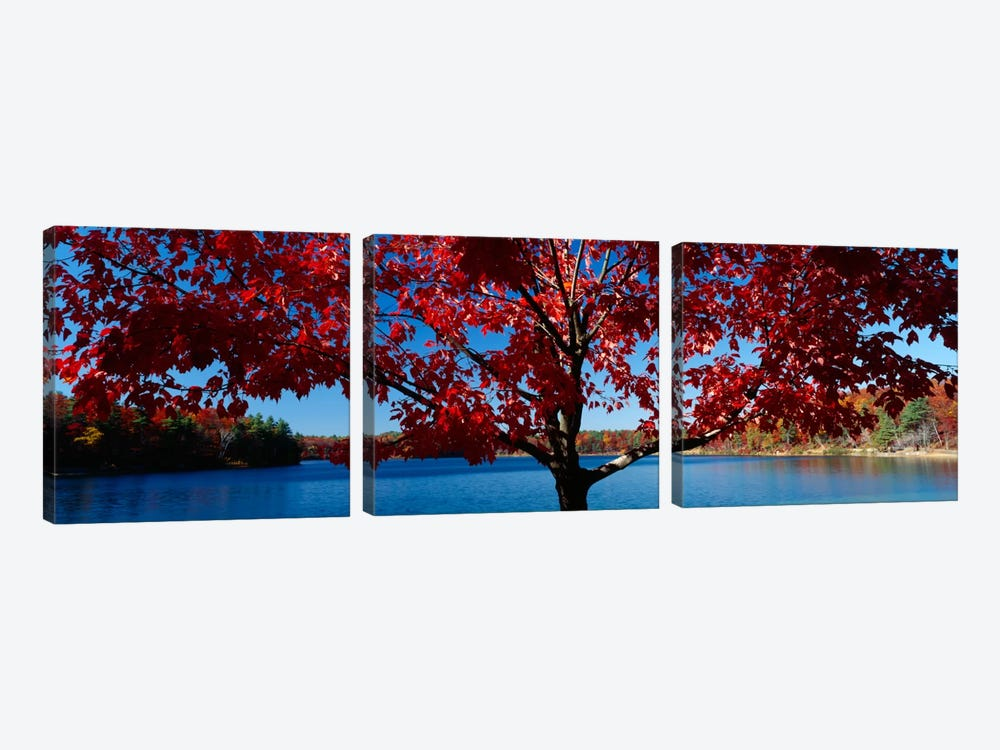 Close-up of a tree, Walden Pond, Concord, Massachusetts, USA by Panoramic Images 3-piece Canvas Art