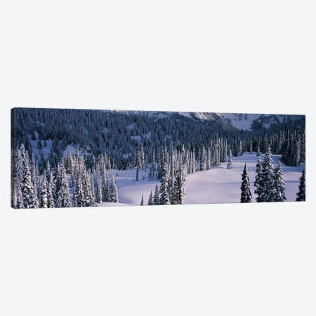 Fir Trees, Mount Rainier National Park, Washington State, USA Canvas Print #PIM2980} by Panoramic Images Canvas Artwork