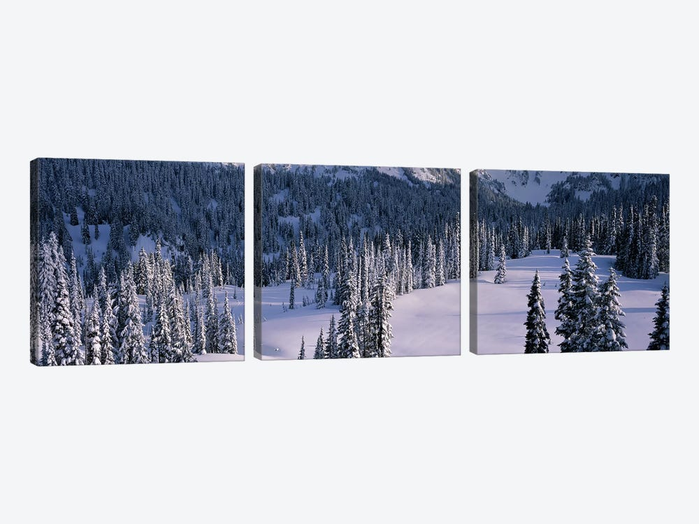 Fir Trees, Mount Rainier National Park, Washington State, USA by Panoramic Images 3-piece Canvas Art