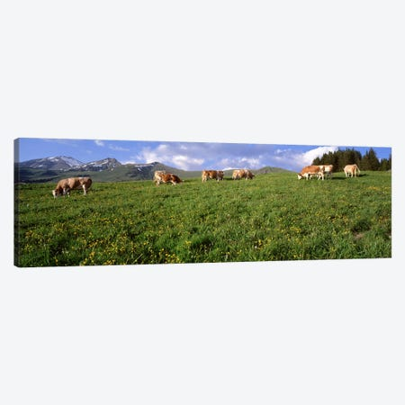 Switzerland, Cows grazing in the field Canvas Print #PIM2999} by Panoramic Images Art Print