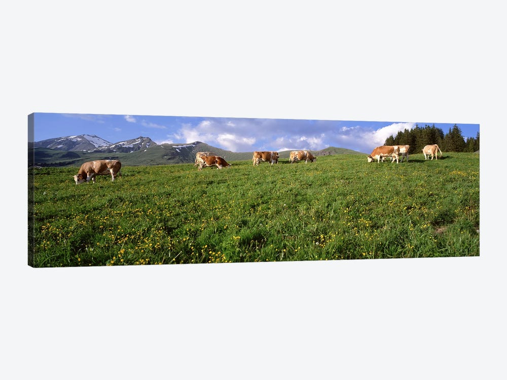 Switzerland, Cows grazing in the field by Panoramic Images 1-piece Canvas Artwork