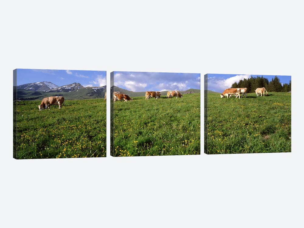 Switzerland, Cows grazing in the field by Panoramic Images 3-piece Canvas Wall Art