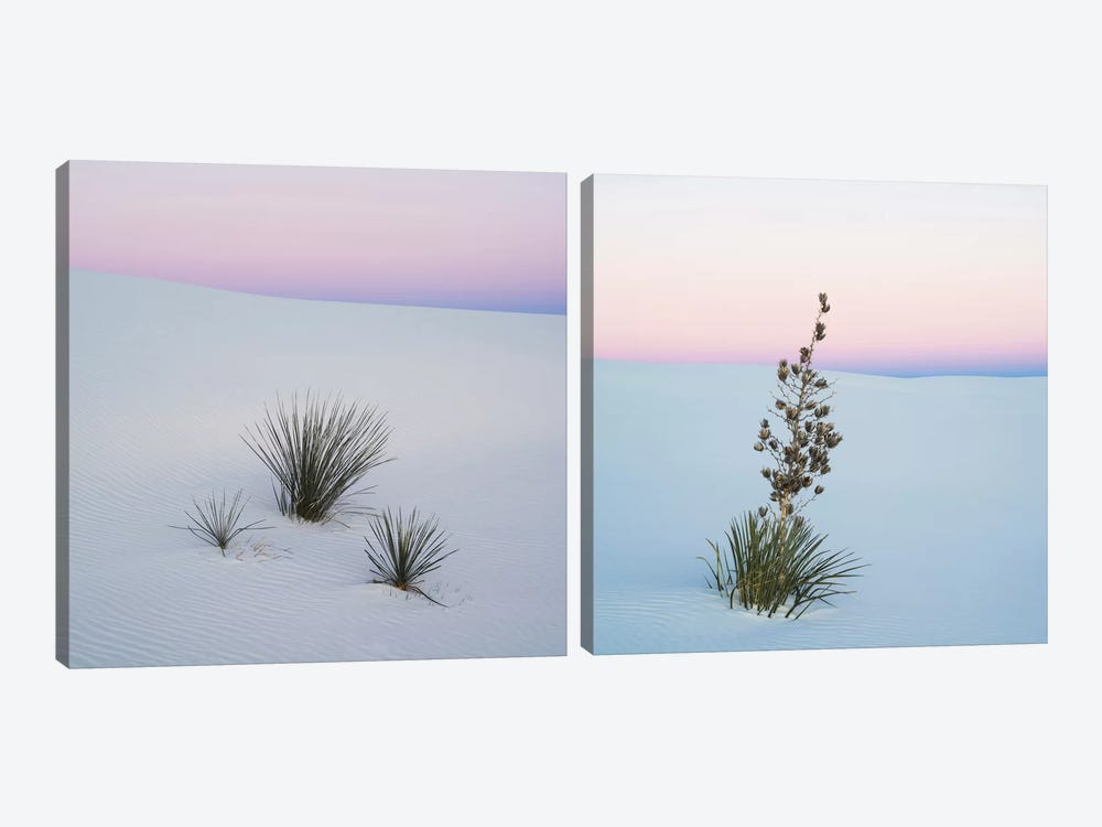 Sopatree Yucca Diptych by Panoramic Images 2-piece Art Print