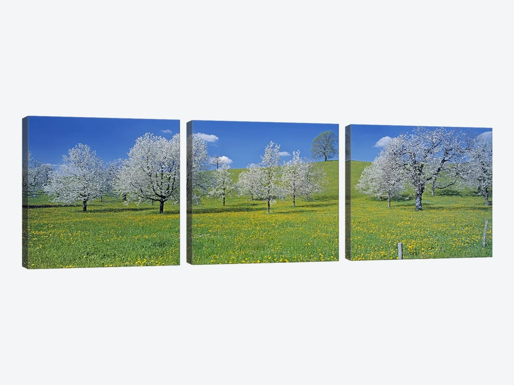 Blossoming Cherry Trees, Zug, Switzerland by Panoramic Images 3-piece Canvas Wall Art