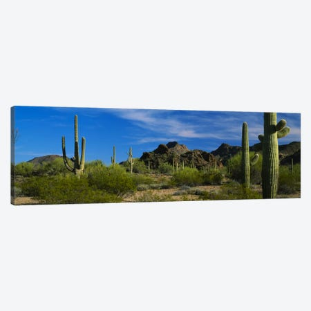 Desert Landscape, Organ Pipe Cactus National Monument, Arizona, USA Canvas Print #PIM304} by Panoramic Images Canvas Artwork