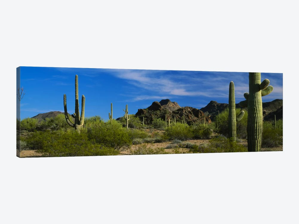 Desert Landscape, Organ Pipe Cactus National Monument, Arizona, USA by Panoramic Images 1-piece Canvas Wall Art