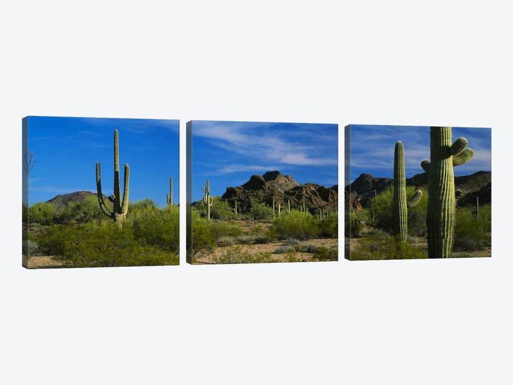 Desert Landscape, Organ Pipe Cactus National Monument, Arizona, USA by Panoramic Images 3-piece Canvas Artwork