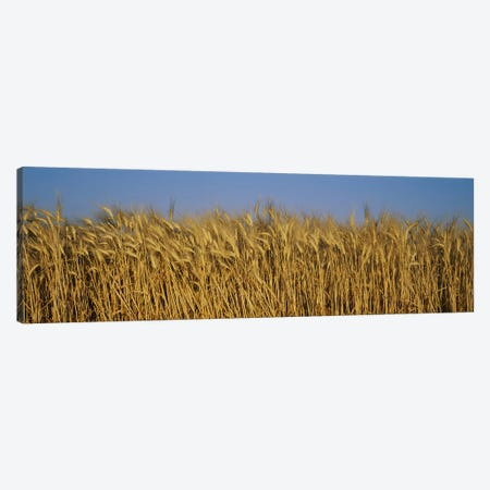Wheat Harvest In Zoom, France Canvas Print #PIM3068} by Panoramic Images Canvas Wall Art