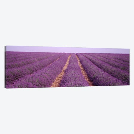 France, View of rows of blossoms in a field Canvas Print #PIM3069} by Panoramic Images Canvas Artwork