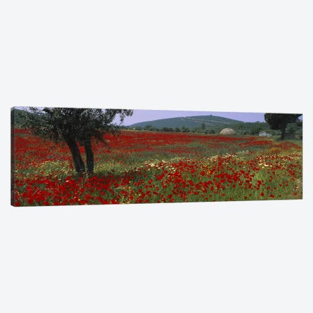 Field Of Red Poppies, Turkey Canvas Print #PIM3074} by Panoramic Images Canvas Art
