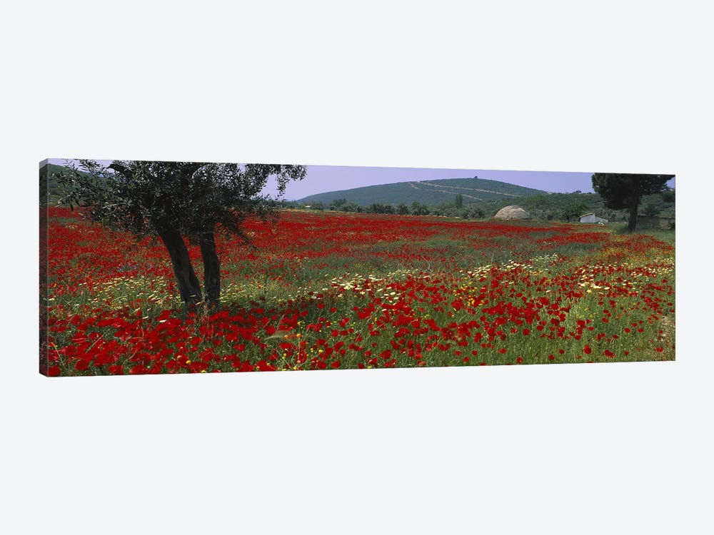Field Of Red Poppies, Turkey by Panoramic Images 1-piece Canvas Art Print