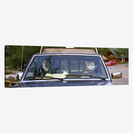 Close-up of two dogs in a pick-up truckMain Street, Talkeetna, Alaska, USA Canvas Print #PIM3106} by Panoramic Images Canvas Wall Art