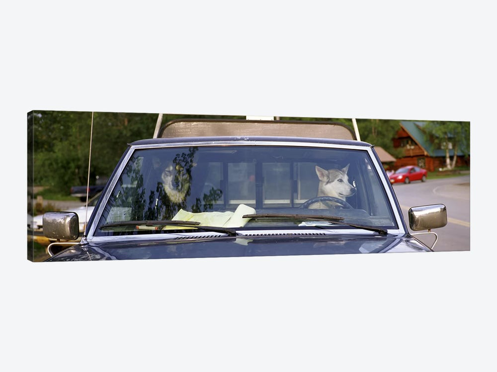Close-up of two dogs in a pick-up truckMain Street, Talkeetna, Alaska, USA by Panoramic Images 1-piece Art Print
