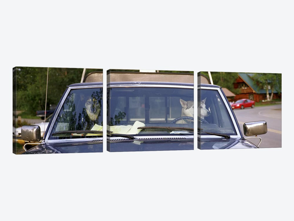 Close-up of two dogs in a pick-up truckMain Street, Talkeetna, Alaska, USA by Panoramic Images 3-piece Canvas Print