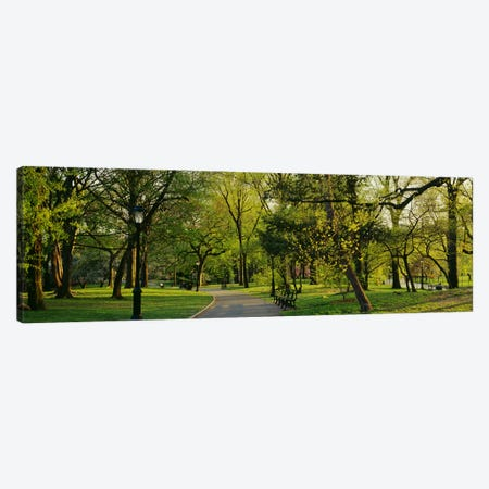 Trees In A Park, Central Park, NYC, New York City, New York State, USA Canvas Print #PIM3153} by Panoramic Images Canvas Art