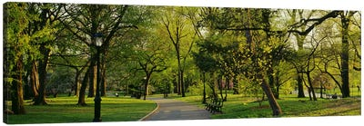 Trees In A Park, Central Park, NYC, New York City, New York State, USA Canvas Print #PIM3153