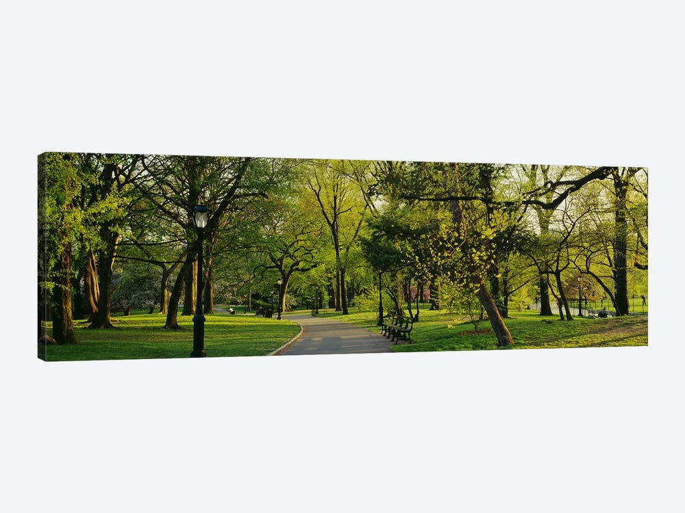 Trees In A Park, Central Park, NYC, New York City, New York State, USA by Panoramic Images 1-piece Canvas Print