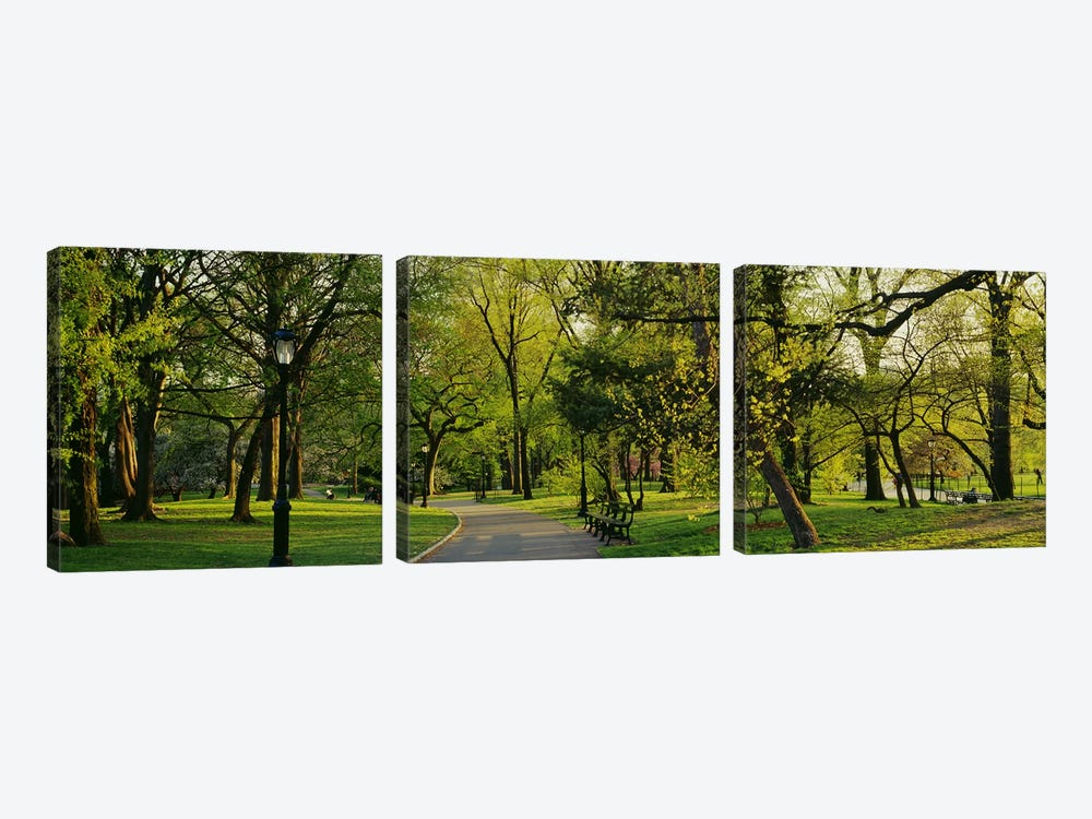 Trees In A Park, Central Park, NYC, New York City, New York State, USA by Panoramic Images 3-piece Art Print