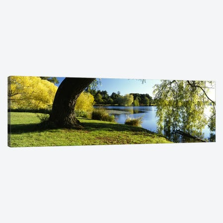 Willow Tree By A Lake, Green Lake, Seattle, Washington State, USA Canvas Print #PIM3179} by Panoramic Images Canvas Wall Art