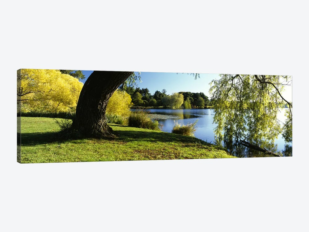 Willow Tree By A Lake, Green Lake, Seattle, Washington State, USA by Panoramic Images 1-piece Canvas Art Print
