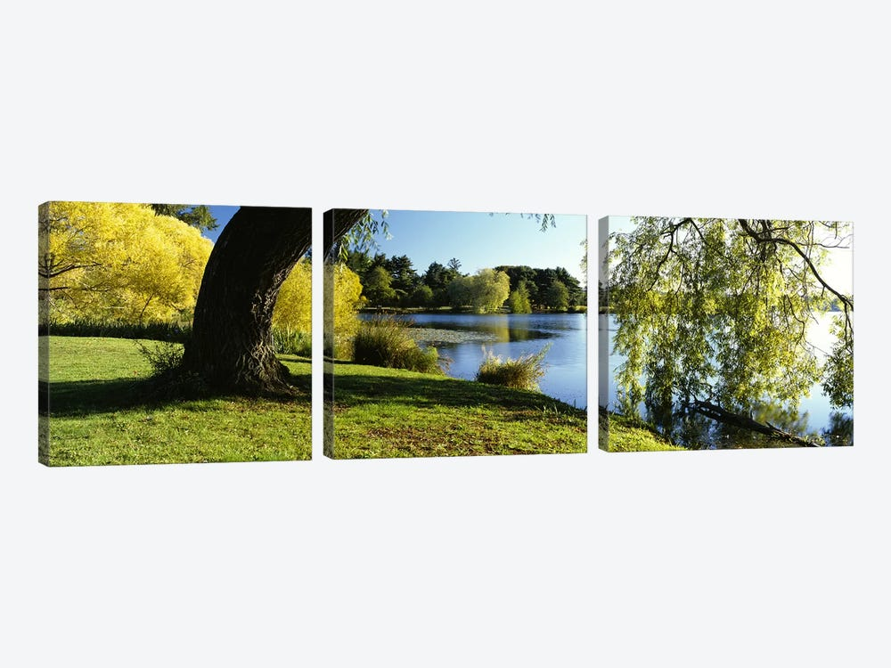Willow Tree By A Lake, Green Lake, Seattle, Washington State, USA 3-piece Canvas Print