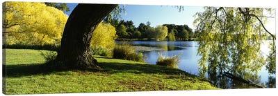 Willow Tree By A Lake, Green Lake, Seattle, Washington State, USA Canvas Art Print