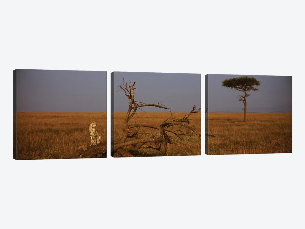 A Lone African Cheetah, Maasai Mara National Reserve, Rift Valley, Kenya by Panoramic Images 3-piece Canvas Wall Art