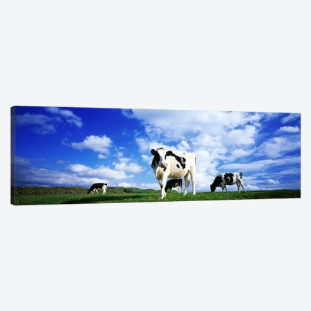 Cows In Field, Lake District, England, United Kingdom Canvas Print #PIM3189} by Panoramic Images Art Print
