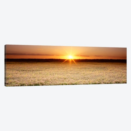 Rice Field, Sacramento Valley, California, USA Canvas Print #PIM324} by Panoramic Images Canvas Art