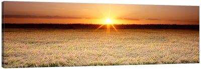 Rice Field, Sacramento Valley, California, USA Canvas Art Print