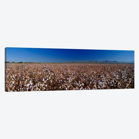 Cotton Field Canvas Print #PIM3273} by Panoramic Images Art Print