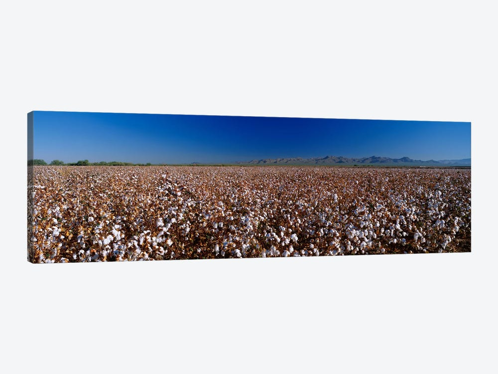 Cotton Field by Panoramic Images 1-piece Art Print