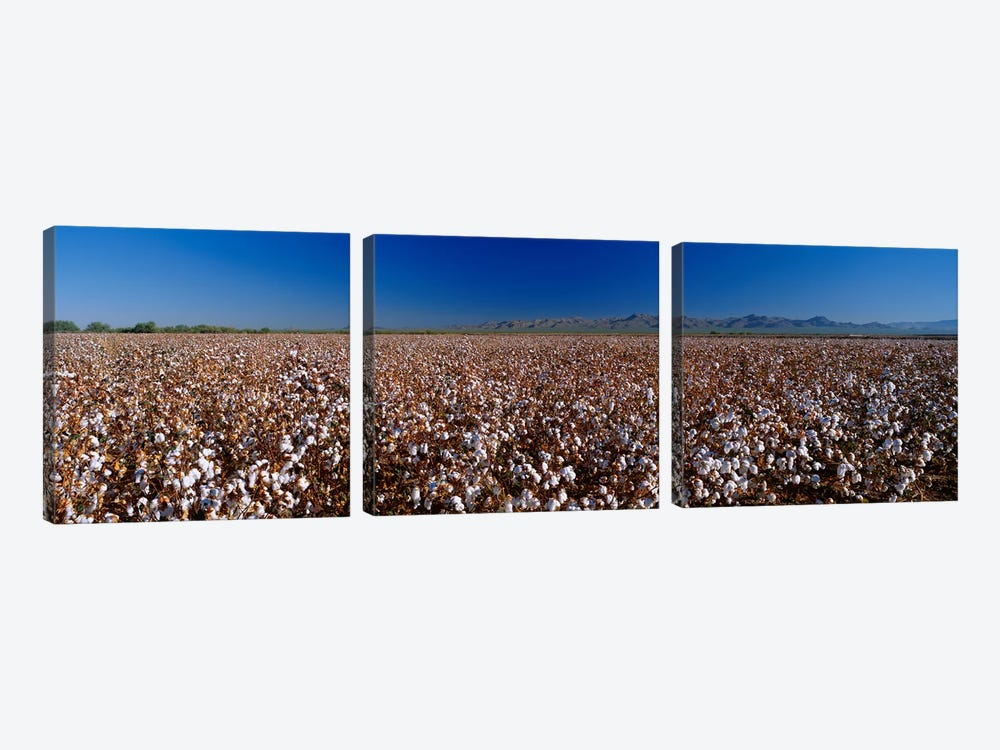 Cotton Field by Panoramic Images 3-piece Canvas Print
