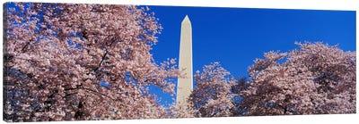 Cherry Blossoms Washington Monument Canvas Print #PIM3279