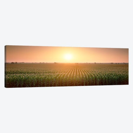 View Of The Corn Field During Sunrise, Sacramento County, California, USA Canvas Print #PIM328} by Panoramic Images Art Print
