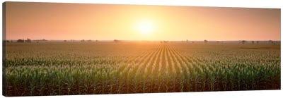View Of The Corn Field During Sunrise, Sacramento County, California, USA Canvas Art Print