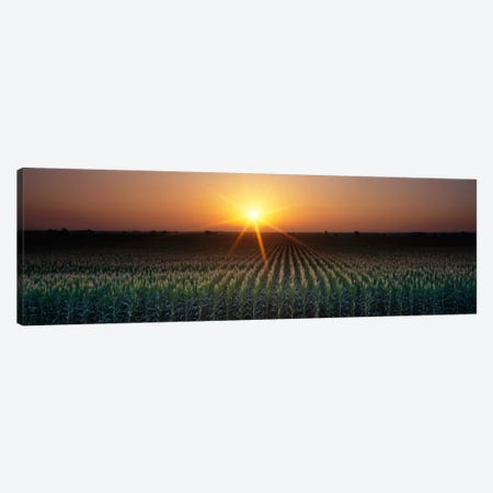 Sunrise, Crops, Farm, Sacramento, California, USA Canvas Print #PIM329} by Panoramic Images Canvas Print