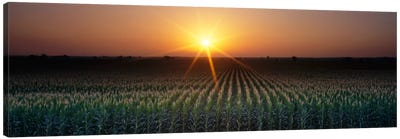 Sunrise, Crops, Farm, Sacramento, California, USA Canvas Art Print