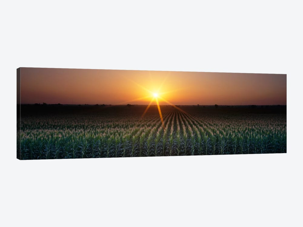 Sunrise, Crops, Farm, Sacramento, California, USA by Panoramic Images 1-piece Canvas Print