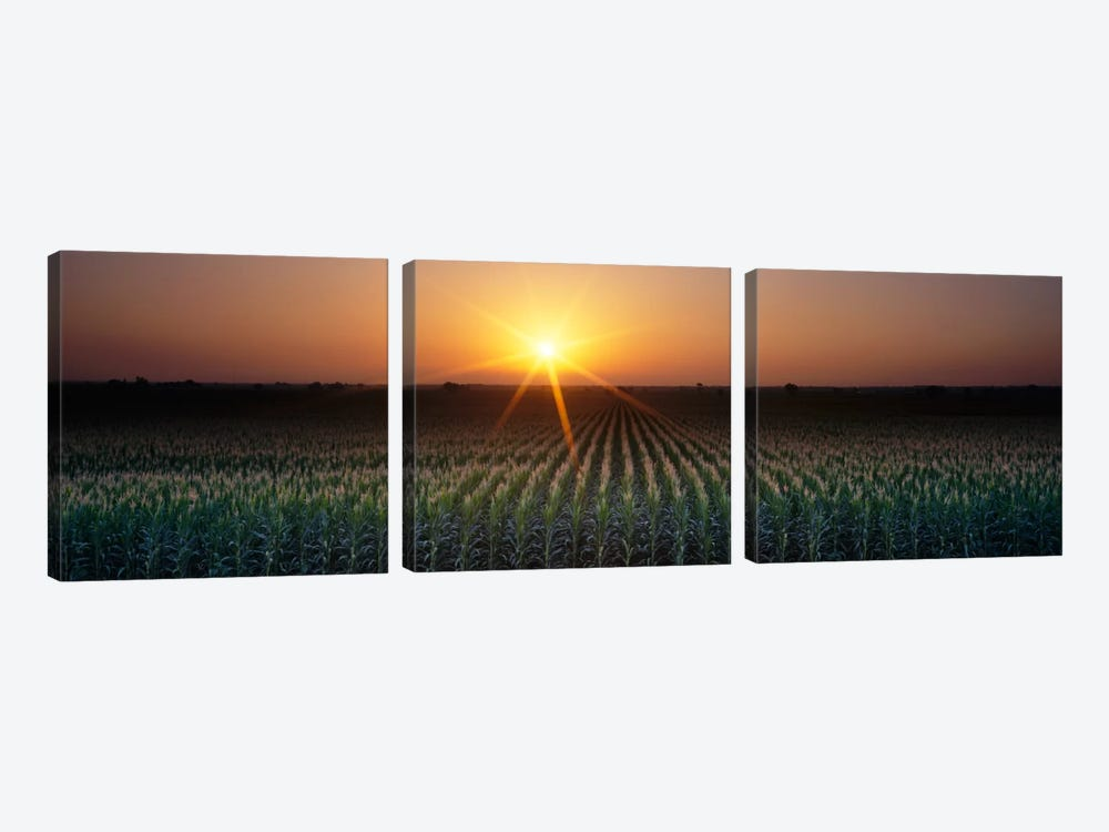 Sunrise, Crops, Farm, Sacramento, California, USA by Panoramic Images 3-piece Art Print