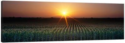 Sunrise, Crops, Farm, Sacramento, California, USA Canvas Art Print
