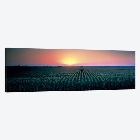 Corn field at sunrise Sacramento Co CA USA Canvas Print #PIM330} by Panoramic Images Canvas Wall Art