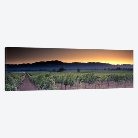 Vineyard Landscape, Napa Valley AVA, Napa County, California, USA Canvas Print #PIM331} by Panoramic Images Canvas Artwork
