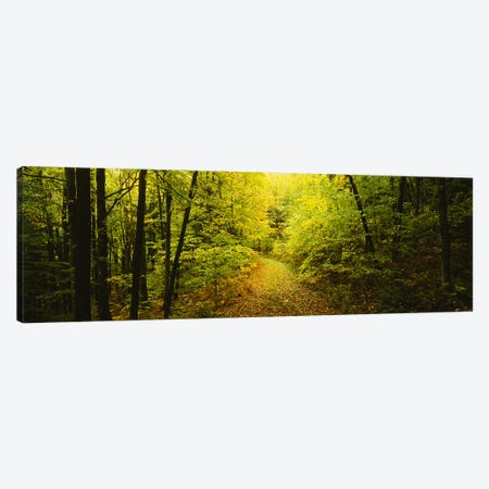 Dirt road passing through a forest, Vermont, USA Canvas Print #PIM3342} by Panoramic Images Canvas Print