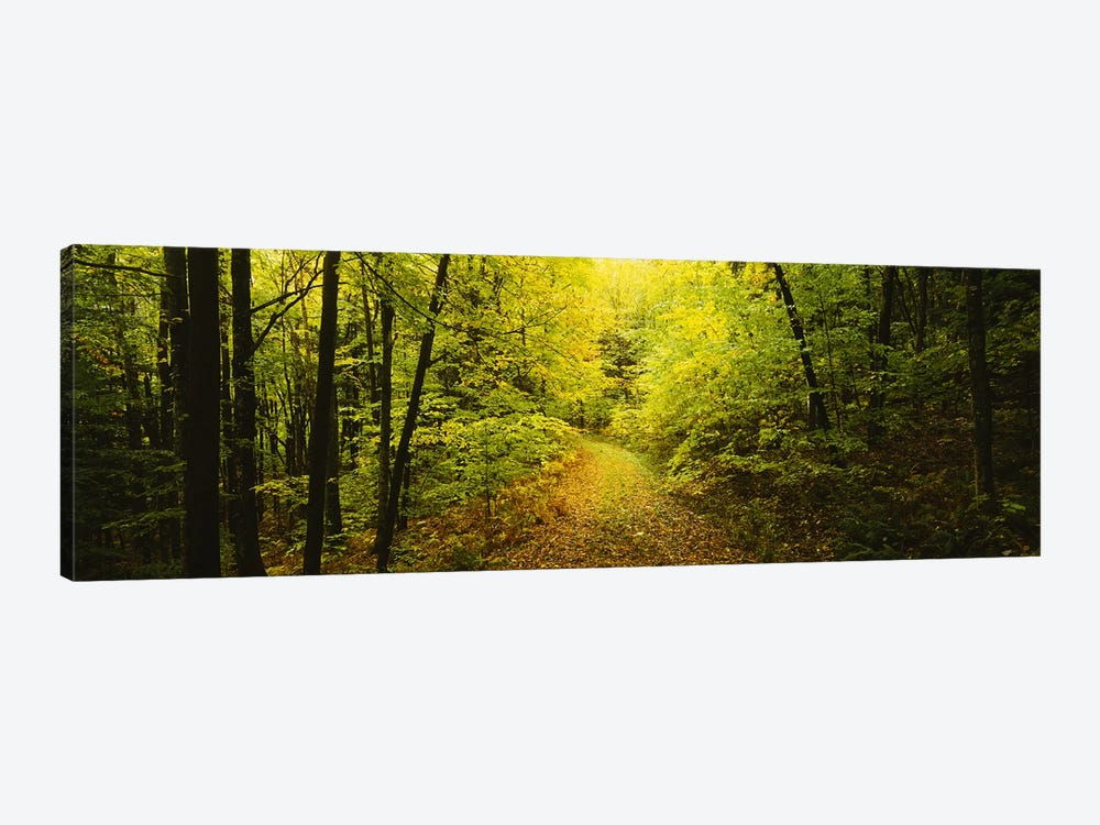 Dirt road passing through a forest, Vermont, USA by Panoramic Images 1-piece Canvas Artwork