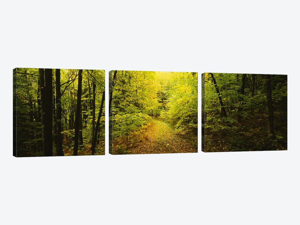 Dirt road passing through a forest, Vermont, USA by Panoramic Images 3-piece Canvas Artwork