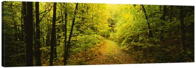 Dirt road passing through a forest, Vermont, USA Canvas Art Print