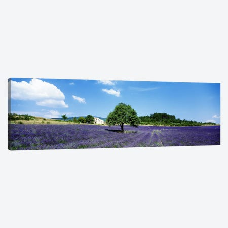 Lavender Field Provence France Canvas Print #PIM3354} by Panoramic Images Canvas Print